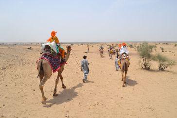 jaisalmer safaria deserto india (10)
