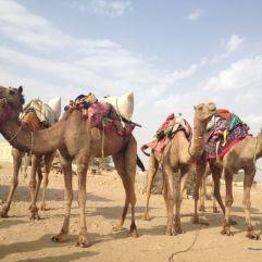 jaisalmer safaria deserto india (298)