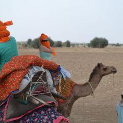 jaisalmer safaria deserto india (30)