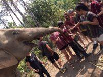 peregrina chiang mai tailandia (1)