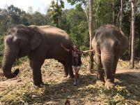 peregrina chiang mai tailandia (2)