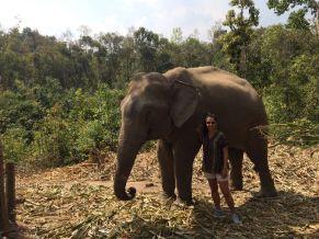 peregrina chiang mai tailandia (28)
