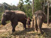 peregrina chiang mai tailandia (4)